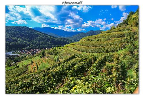 Vignoble de l'Appenthal - Buhl - Haut Rhin