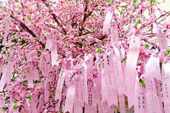 Auspicious ribbons