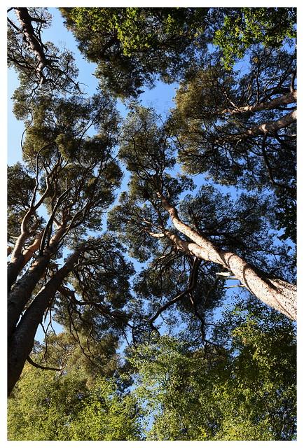 Tall Tree's.