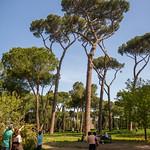 I pini di Villa Borghese - https://www.flickr.com/people/53407766@N00/