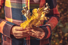 Dry leaves in the hands of the girl. The concept of autumn walks