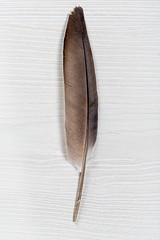 Pigeon feather on white wooden background