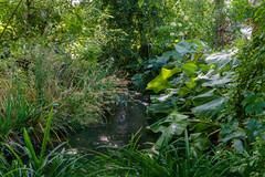 2734 Les jardins de la Fondation Claude Monet