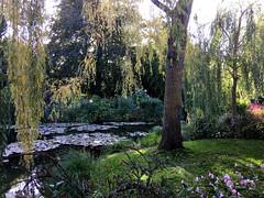 16 55 06 Les jardins de la Fondation Claude Monet