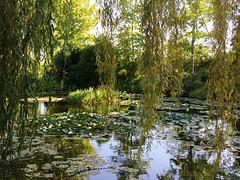 16 55 22 Les jardins de la Fondation Claude Monet