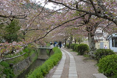 The Philosophers Walk is about 2km long and runs along a canal