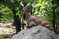 Bronx zoo, New York, USA