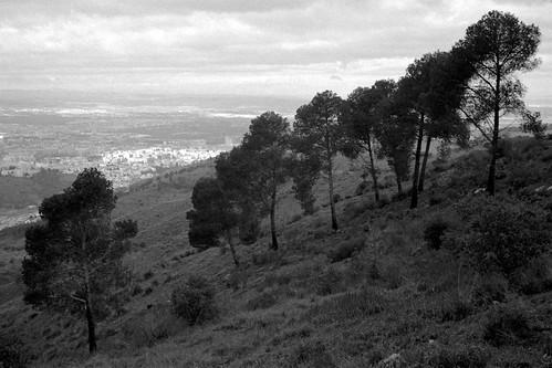 Sosny nad Granadą / Pines over Granada