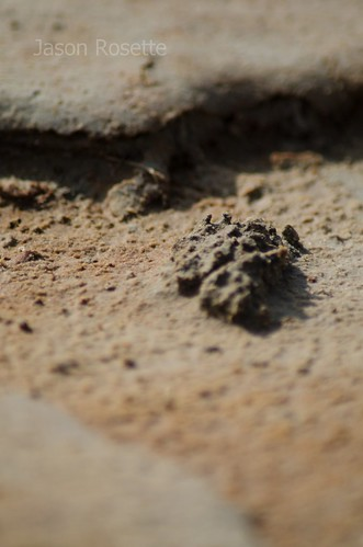 Close up of sand pile excreted by land crab in Cambodia