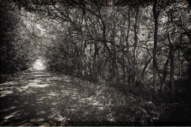 Enchanted path