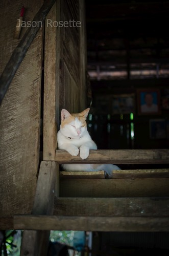 Cat sleeps in the doorway of a rural wooden house in Cambodia (wider)
