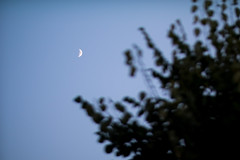 New moon behind the forest canopy