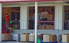 Lewis Orchard Store - back view