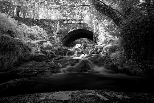Shankill river ir