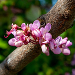 blossoms - https://www.flickr.com/people/53407766@N00/