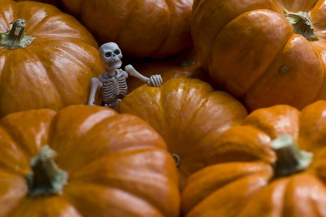 Pumpkin Patch fashion pose