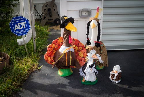 Wide View of Thanksgiving Animals in Florida
