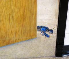 Painting of Ray Jezerinac's crayfish lab (Ohio State University of Newark) 3