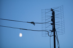 TV antenna and a new moon in the background