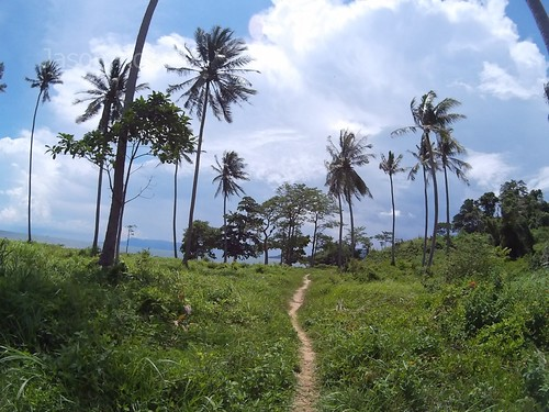Wide angle view of small trail and palm trees on tropical island