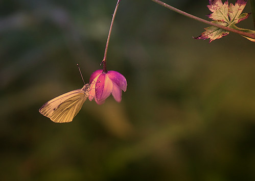 """""""The caterpillar does all the work, but the butterfly gets all the publicity."""" ― George Carlin"""
