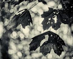 Forest Undergrowth 1