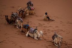 2018 Marokko 074 IMG_1302-t