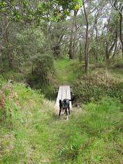 Footbridge - Bibbulmun Track, Nullaki Peninsula, Western Australia