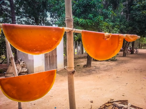 Medium View of Mango Leather Drying on Bamboo Poles in Siem Reap (#2)