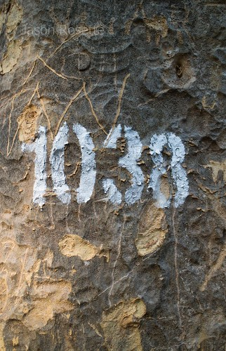 Numbers Stenciled on a Tree Trunk in Ho Chi Minh City