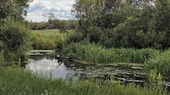 Backwater / Заводь