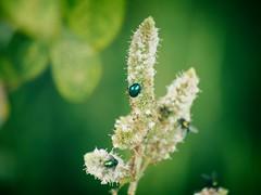Nature Bokeh | 3. September 2019 | Fehmarn - Schleswig-Holstein - Deutschland