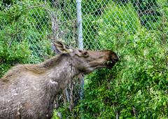 Kincaid Park, Anchorage, Alaska
