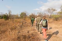Safari Selous - extended cut-076