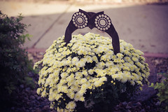 Mums for Autumn