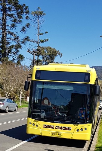 Volvo of Kiama Coaches 8595 MO Jamberoo. For the unknown MO means Motor Omnibus, aĺso the nane of my last dog.