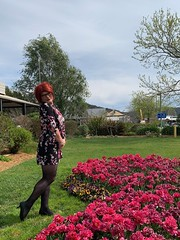 Cece's Tulip Time (6)