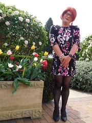 Cece's Tulip Time (1)