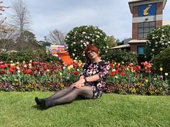 Cece's Tulip Time (11)