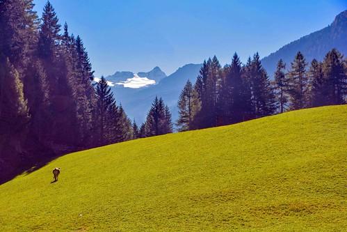 Una mucca solitaria sul pascolo alpino