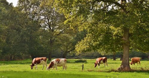 Kraloo - Drenthe