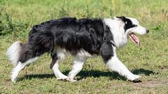 Hondenwandeling Brabantse Wal Noordpolder Ossendrecht MyMartin 15 september 2019