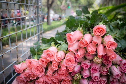 Partial stack of pink roses with street view in Ho Chi Minh City