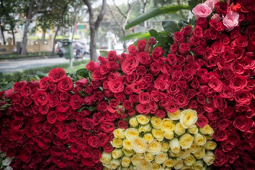 Deep Red Roses with Smaller pile of Yellow Roses