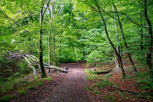 Im Saarkohlenwald