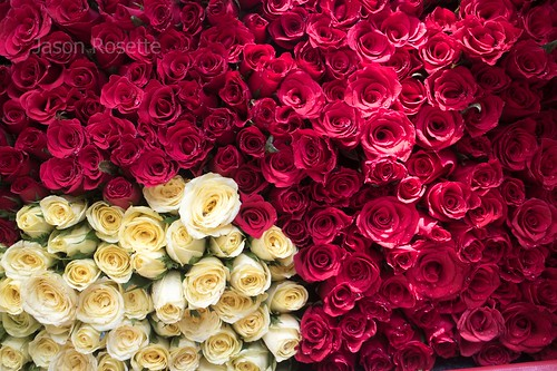 Deep Red Roses with Smaller pile of White Roses