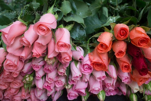 Stack of Pink and Red Roses with Green Stems in Ho Chi Minh City, Vietnam