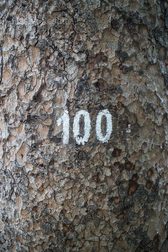 Number 100 on a Tree in Saigon (vertical)