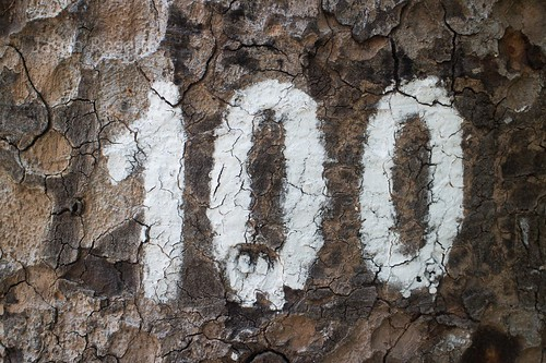 Number 100 on a Tree in Saigon