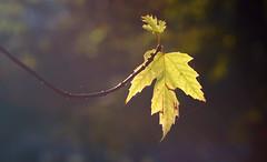 In an autumn morning / Осенним утром